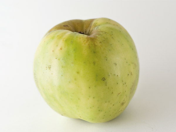 Exceedingly acid apple, but which also has a bitter-sweet touch: Txalaka